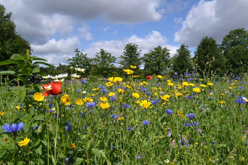 Artenvielfalt auf der Drachenwiese - davon brauchen wir mehr!