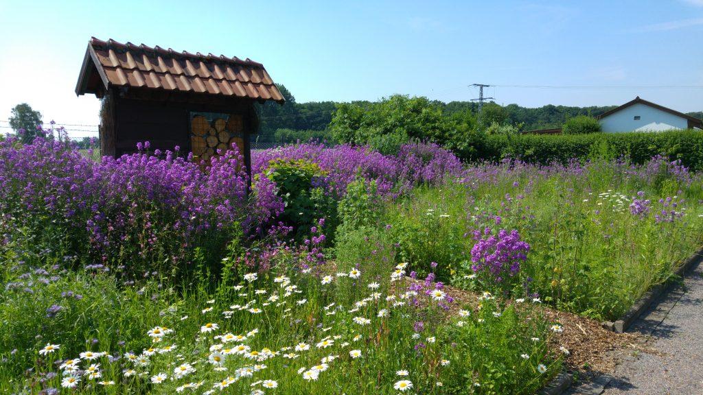 Blühfläche und Wildbienen-Hotel fördern die Artenvielfalt in unserer von der Landwirtschaft geprägten Kulturlandschaft.