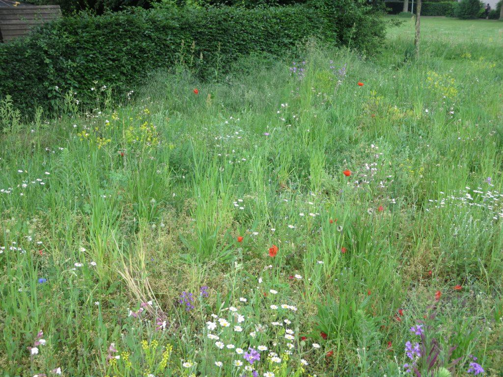 Die Kinder der Tagesstätte können hier viel lernen über Wildblumen und ihre Bedeutung für die Insekten. Artenschutz dient dem Gemeinwohl.